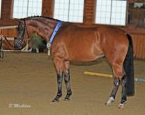 Priya (aka Prada) Champion Mare at High Point Hanoverian Inspection